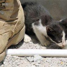 Коты служащие в армии