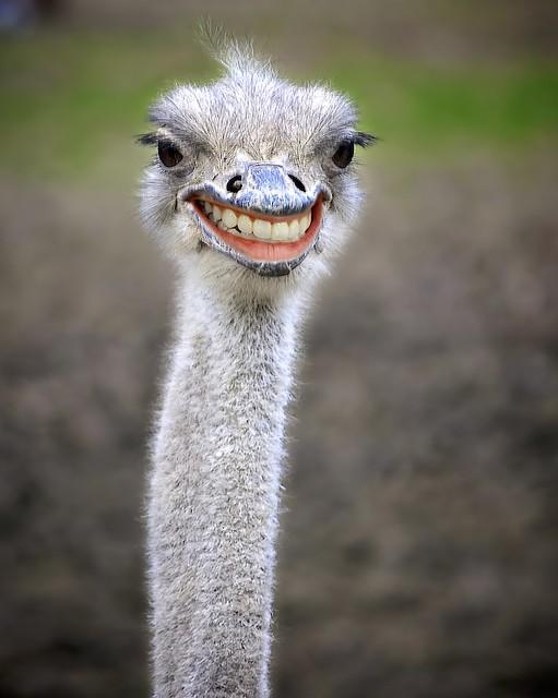 Днем, прикол с картинками страуса