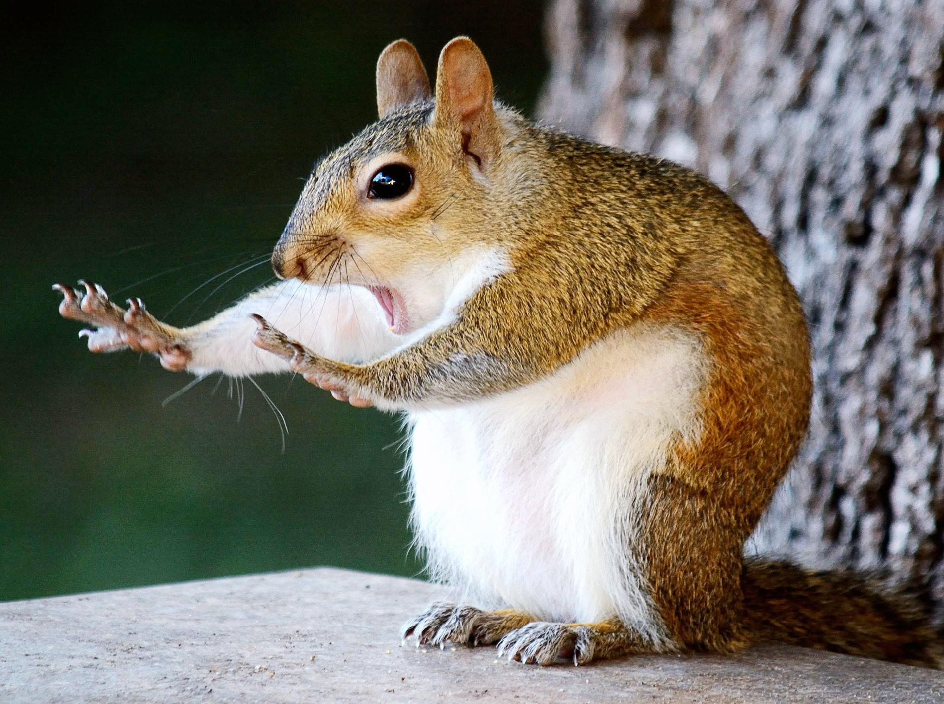 трудно сот самые прикольные животные в мире фото ингредиентами
