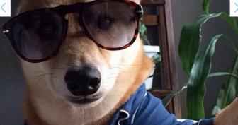 Собаки которые делают селфи
