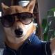 Собаки, которые делают селфи