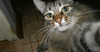 Коты, которые делают селфи (19 фото)