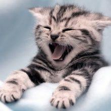 Забавные и милые котята (14 фото)