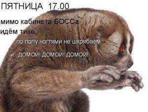 prikol_kartinki-300x228