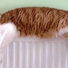 Когда включат отопление в Москве и Московской области ?