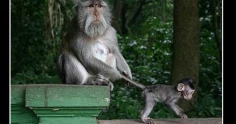 Смешные картинки обезьян. (14 фото)