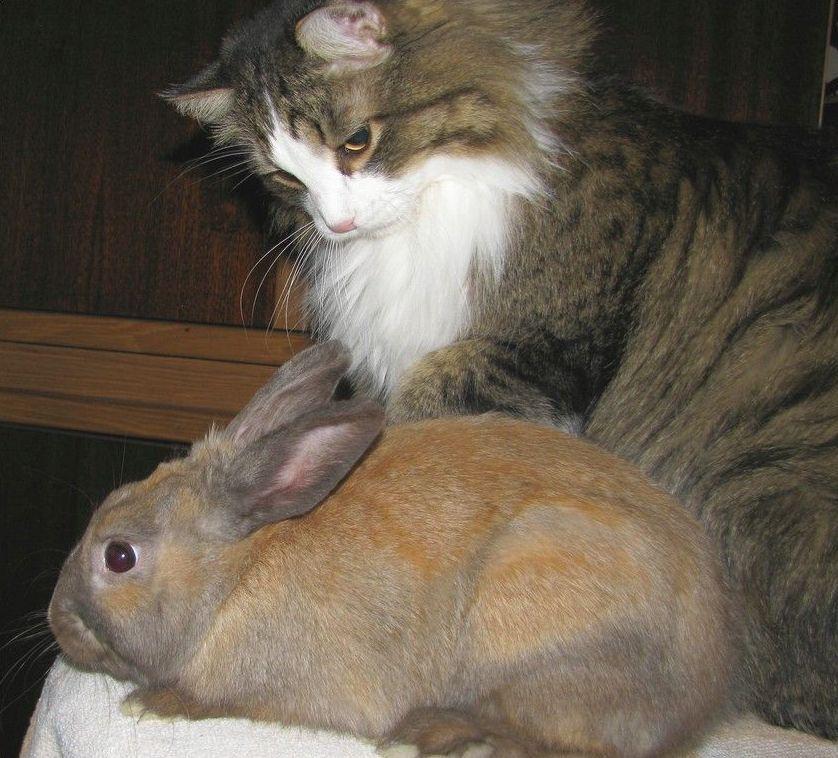 funny_animals_cm_20120404_00609_007