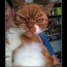 Смешные картинки котов (21 фото)