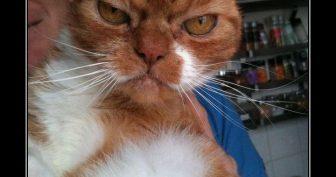 Смешные картинки котов. (16 фото)