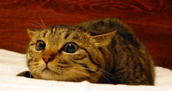 Фото кошек прикольные. (12 фото)