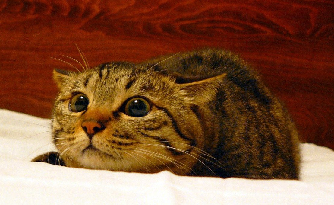 Dialated-eye-cat