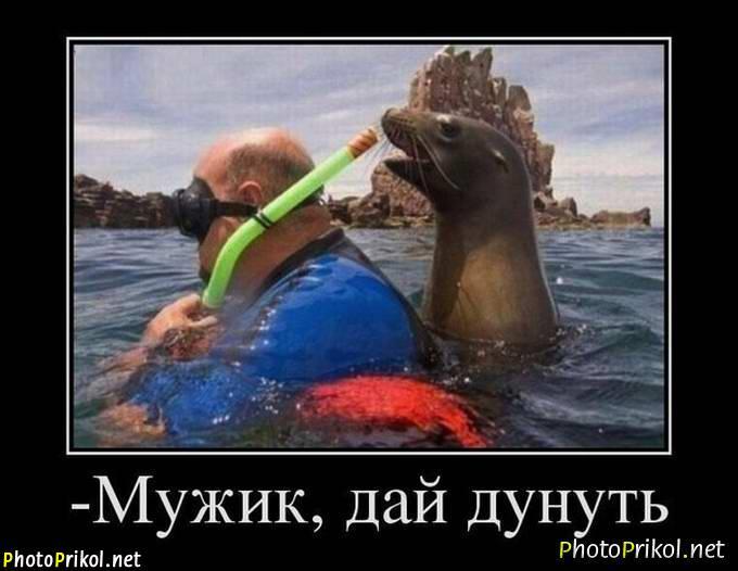 PhotoPrikol.net Website http://www.photoprikol.net