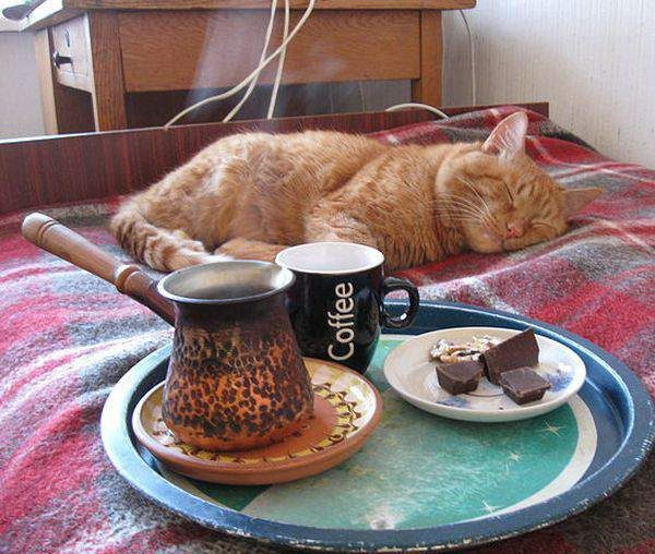 funny-pictures-cat-wake-up-morning-coffee