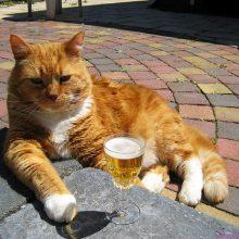 Смешные картинки котов с надписями (18 фото)