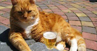 Смешные картинки котов с надписями. (13 фото)