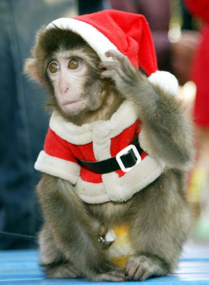 santa-monkey