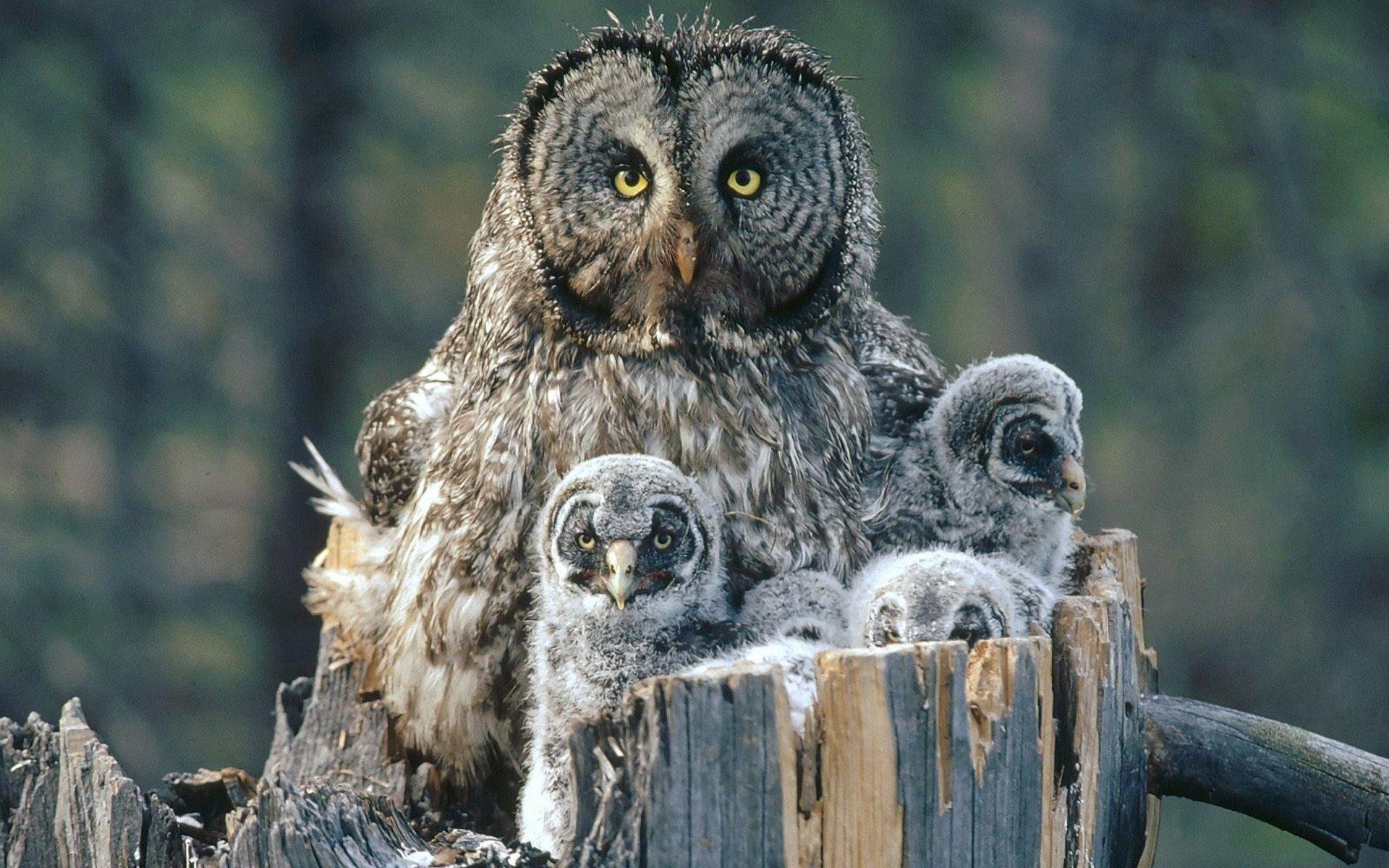 1082875-1920x1200-775_232-owl-fa