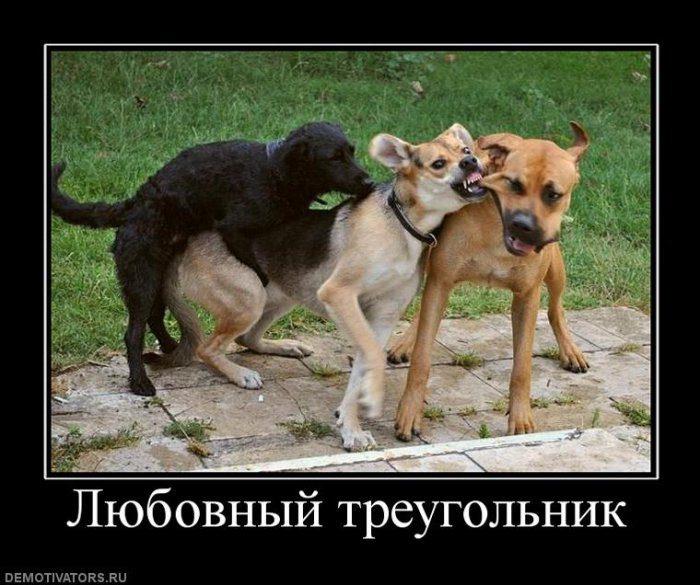 1308900805_1308815452_203656_lyubovnyij-treugolnik