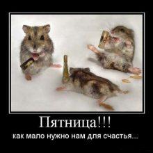 Смешные картинки про пятницу (18 фото)