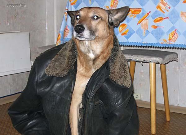 dog_201