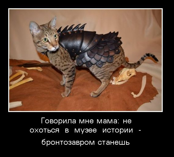 images_164