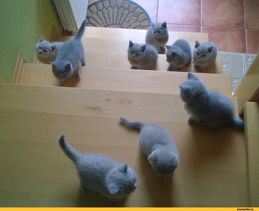 котятки-живность-1592926