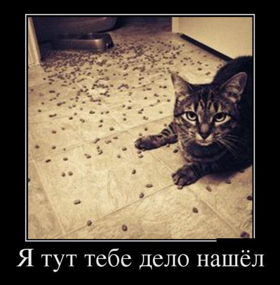 mypipisin.ru_142953896229