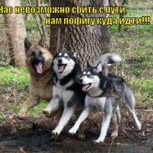 Прикольные фото собак (12 фото)