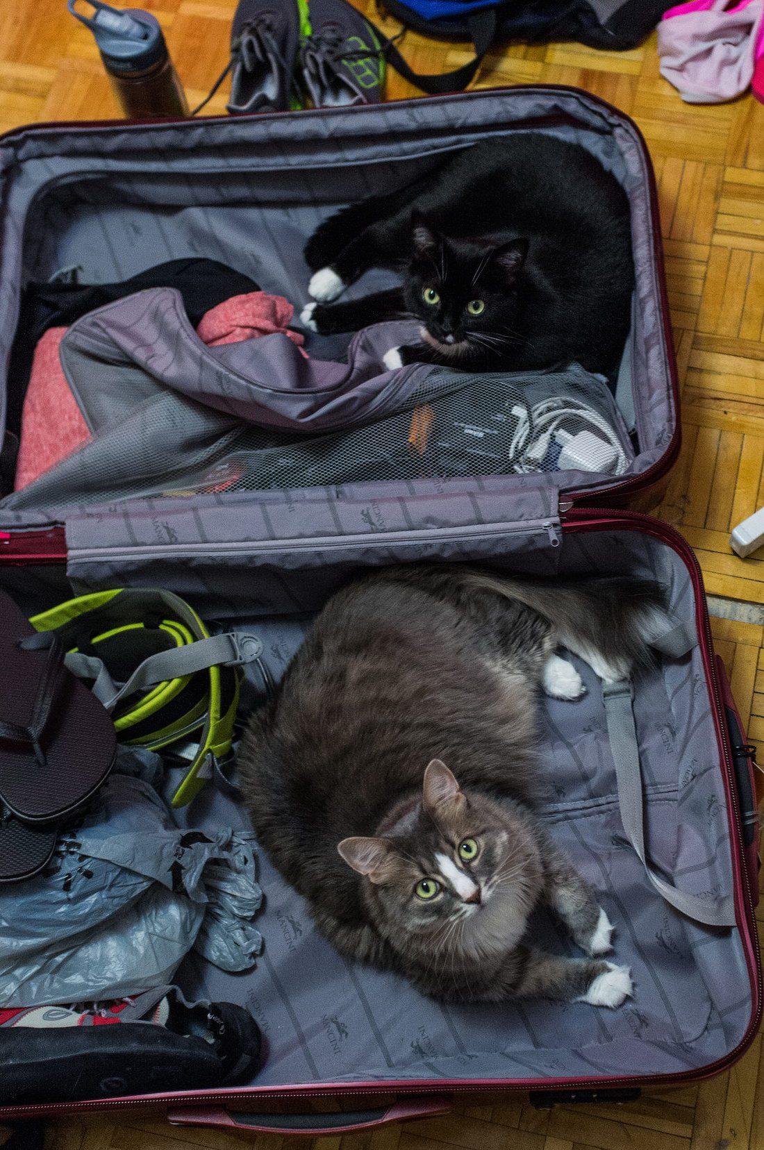 r2_www.catsmob.com_funny_animals_04246_019_5efa5aa6