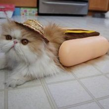 Смешные картинки про котят (16 фото)