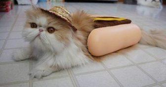 Смешные картинки про котят. (11 фото)