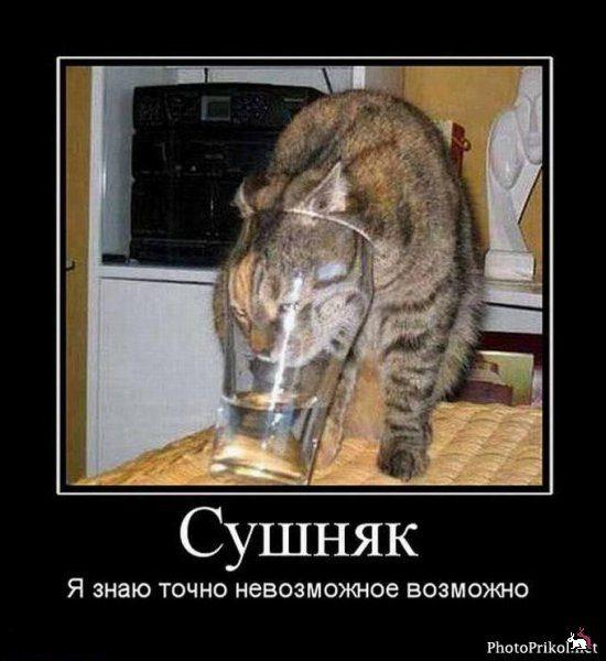 1389468558_klassnie_demovitatori_o_jivotnih-61