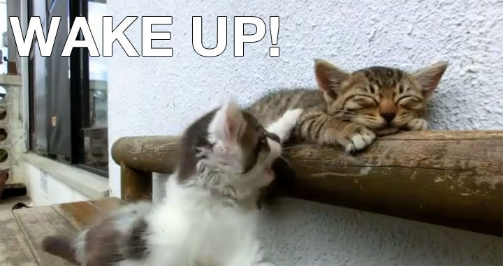 cat_wakes_up_cat