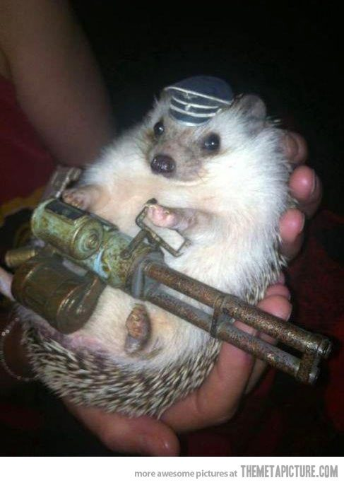 funny-hedgehog-soldier-cute-hat