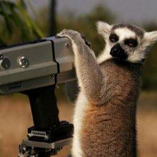 Животные и фотоаппарат (16 фото)