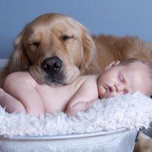 Домашние животные и дети (21 фото)