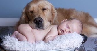 Домашние животные и дети. (11 фото)