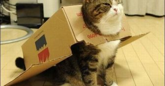 Коты в коробках. (11 фото)