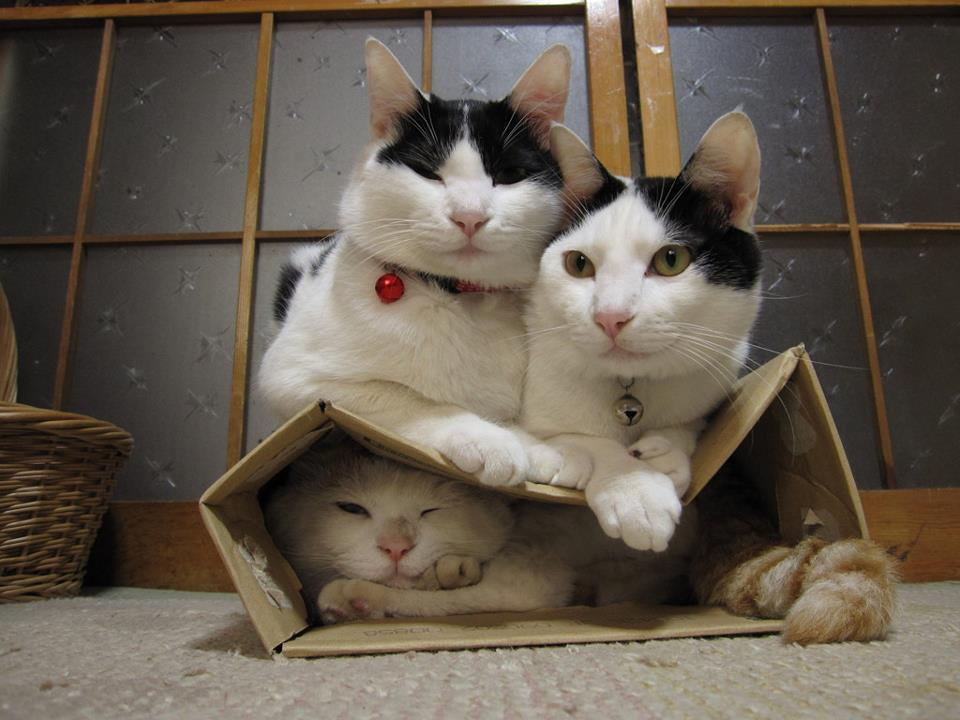 коты-в-коробке-4