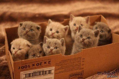 коты-в-коробке-6