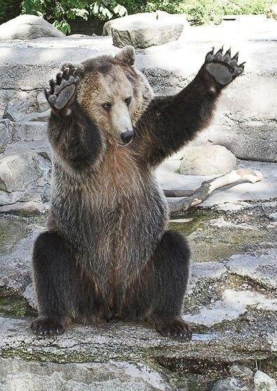 медведи картинки смешные