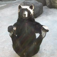 Смешные медведи. (11 фото)