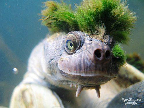 1221070274_turtles001