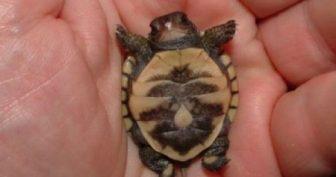 Прикольные черепахи. (11 фото)