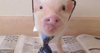Прикольные картинки про свиней. (11 фото)