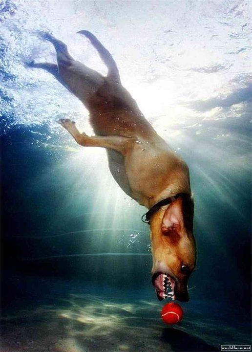 Sobaki-pod-vodoy