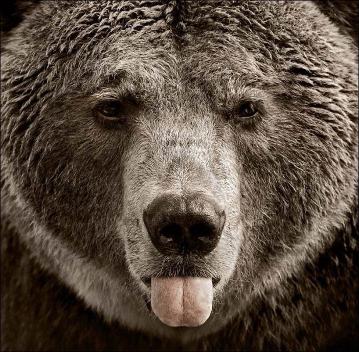 bears-bears-08