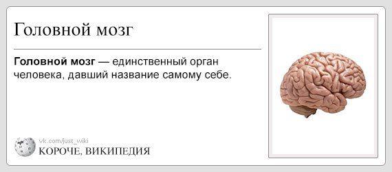 korochevikipediya-kartinki-s-nadpisyami-prikolnye-nadpisi-smeshnye-obyavleniya_454985637