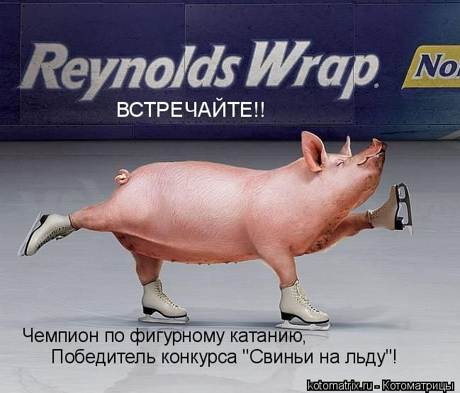 Ландышами, свинья смешные картинки с надписями
