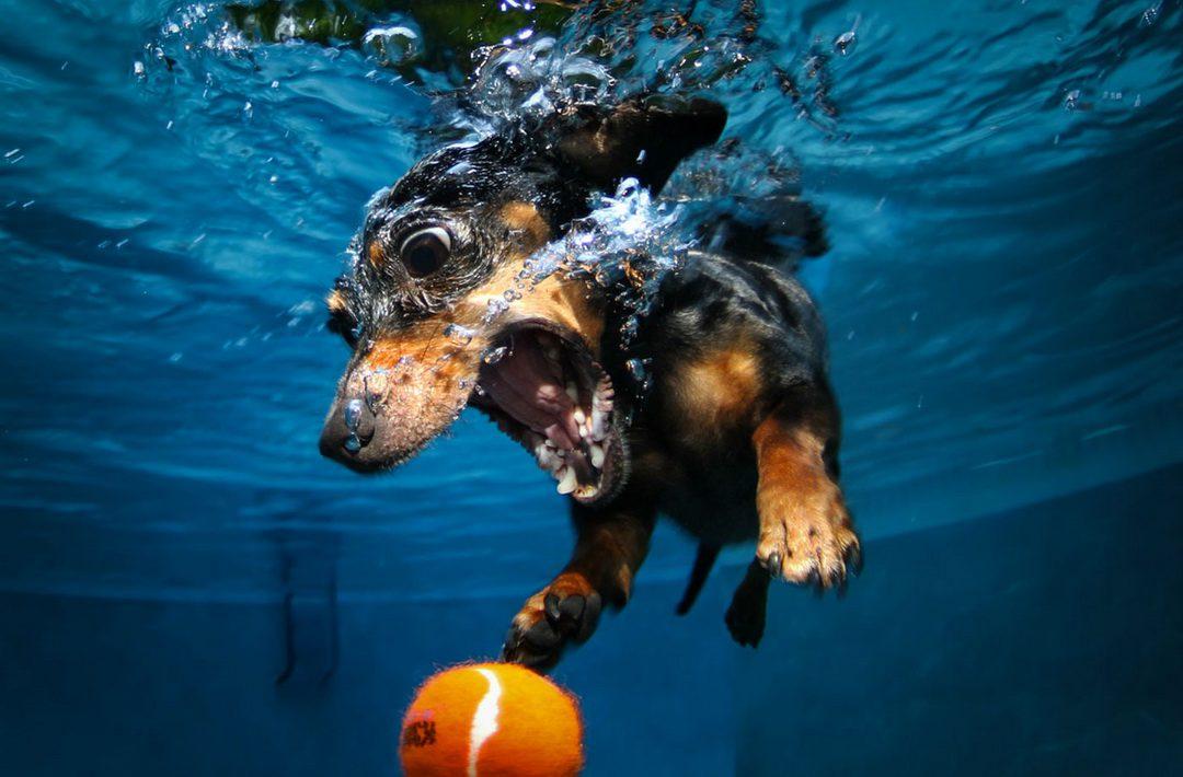 собаки-под-водой-продолжение-в-комментариях-песочница-живность-813415